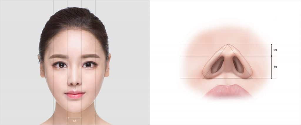 ideal ratio and proportions for a beautiful nose - dream plastic surgery singapore